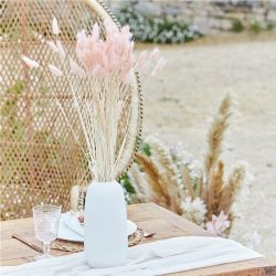 pink bunny tail grass