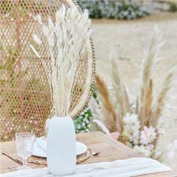 white bunny tail grass